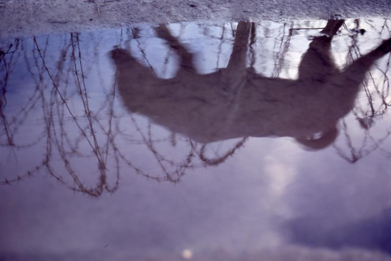 dog-puddle-800x535.jpg