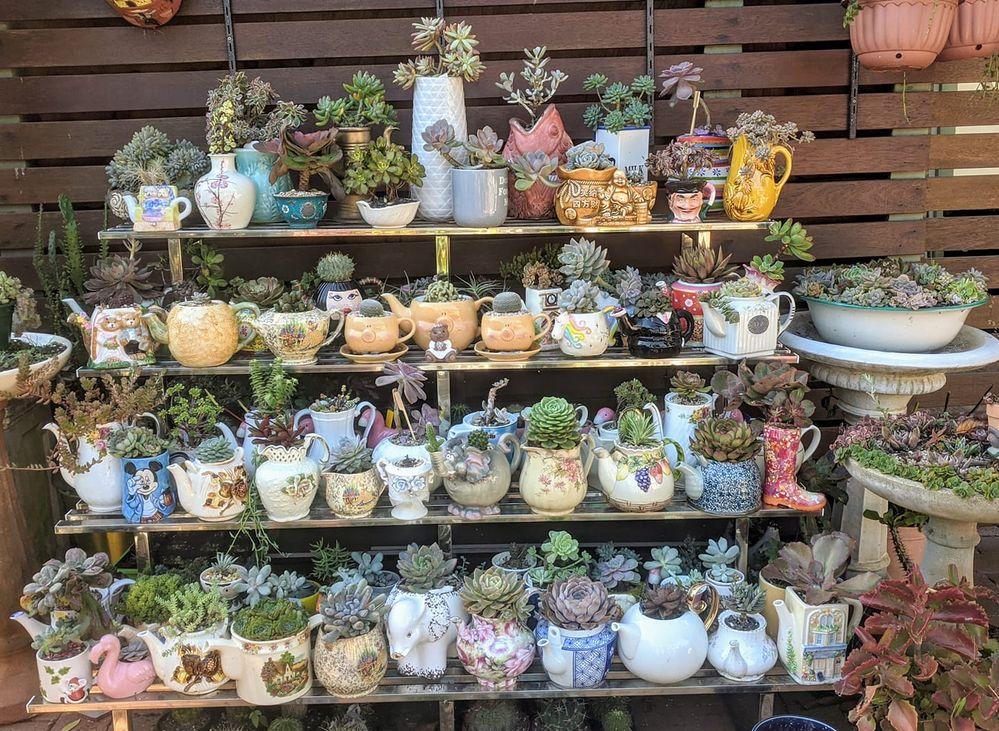 teapot plants.jpg