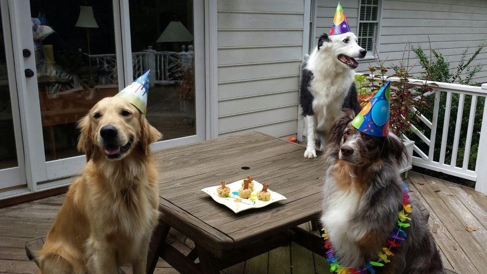 4q1hm-birthday-dogs.jpg